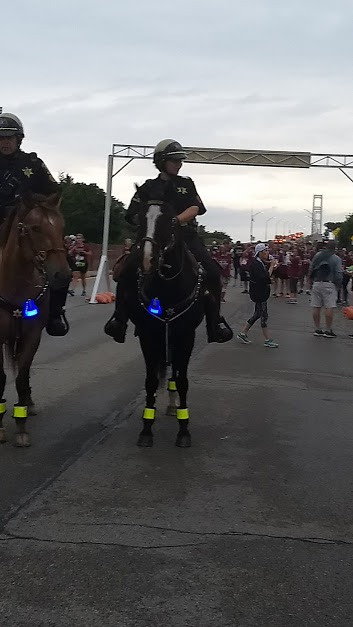 bridge run horses